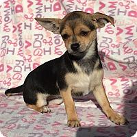 Adopt A Pet :: Jasmine - Temecula, CA