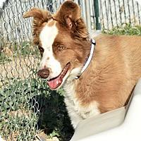 Adopt A Pet :: Asher - Meridian, ID