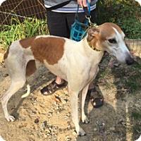 Adopt A Pet :: Ww's Reynolds - Gerrardstown, WV