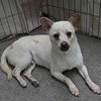 Adopt A Pet :: Carson Daly - Reno, NV