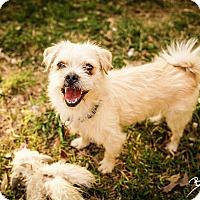 Adopt A Pet :: Captain - San Antonio, TX