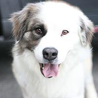 Adopt A Pet :: Pasha - Canoga Park, CA