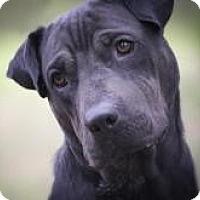 Adopt A Pet :: TASHA - Odessa, FL