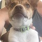 Adopt A Pet :: Wiki