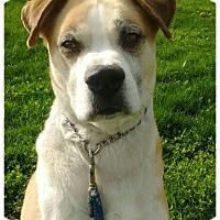Adopt A Pet :: kosomoto - Bay City, MI