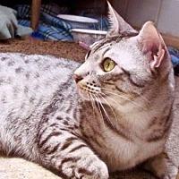 Adopt A Pet :: Blue - Davis, CA