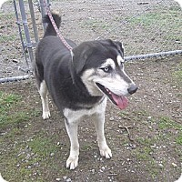 Adopt A Pet :: Bella Luna - Crescent City, CA