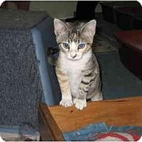 Adopt A Pet :: Buffy - Terre Haute, IN