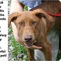 Adopt A Pet :: # 318-09 @ Animal Shelter - Zanesville, OH
