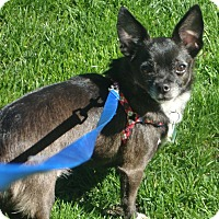 Adopt A Pet :: Scrappy - Osseo, MN