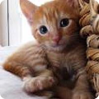 Adopt A Pet :: Remy - Reston, VA
