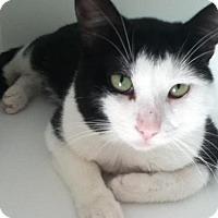 Adopt A Pet :: Melvin - Hamilton, ON