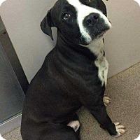 Adopt A Pet :: Moses - Youngsville, NC