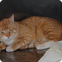 Adopt A Pet :: Garfield - Parsons, KS