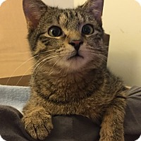 Adopt A Pet :: Jasper -Adoption Pending - Arlington, VA