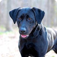Adopt A Pet :: Remy - Edwardsville, IL