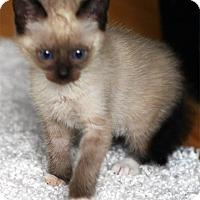 Adopt A Pet :: Gala - N. Billerica, MA
