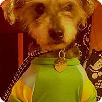 Adopt A Pet :: CHESTER - Irvine, CA