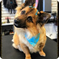 Adopt A Pet :: Margot - Los Alamitos, CA