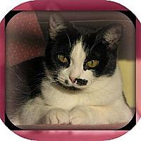 Adopt A Pet :: Midge Monroe - Laconia, IN