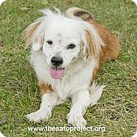 Adopt A Pet :: Hemsworth - Brooklyn, NY