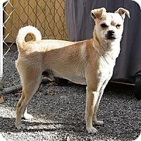 Adopt A Pet :: Cody - Hamilton, ON
