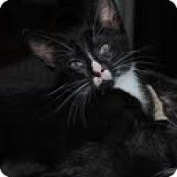 Adopt A Pet :: Sylvester - Waxhaw, NC