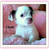 Adopt A Pet :: CINDY - Higley, AZ