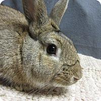 Adopt A Pet :: Kimmo - Newport, DE