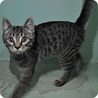 Adopt A Pet :: Sangria - Rockaway, NJ