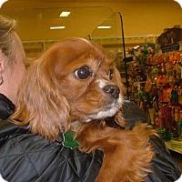 Adopt A Pet :: Tito - Westport, CT