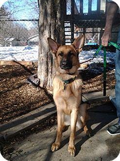 German Shepherd Dog Dog for adoption in Palmyra, Nebraska - Bear