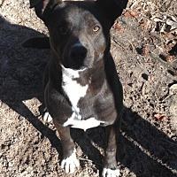 Adopt A Pet :: Houston - Pointblank, TX