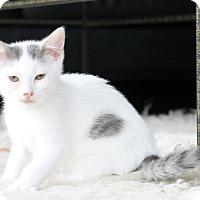 Adopt A Pet :: George - Horsham, PA