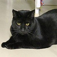 Adopt A Pet :: Valentine - Morgan Hill, CA