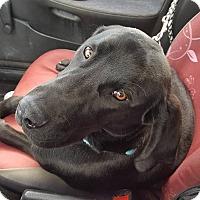 Adopt A Pet :: Diesel - Chewelah, WA
