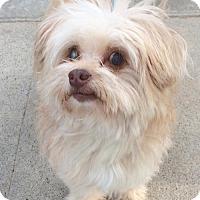 Adopt A Pet :: Baxter - Newport Beach, CA