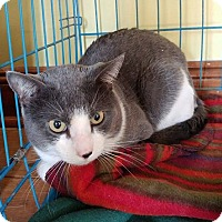Adopt A Pet :: Grayson - Middletown, NY