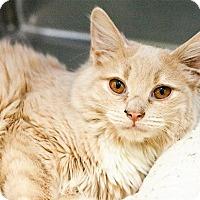 Adopt A Pet :: Cinna Bun - Kenai, AK
