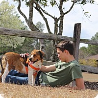 Adopt A Pet :: Kelly Mae - Pinehurst, NC
