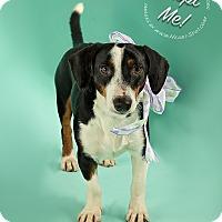 Adopt A Pet :: Cappy - Gillsville, GA