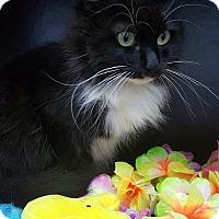 Adopt A Pet :: Oreo - Albemarle, NC