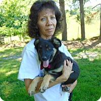 Adopt A Pet :: Saphira - Nashua, NH