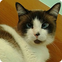 Adopt A Pet :: Chase - Brimfield, MA