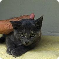 Adopt A Pet :: Echo - Island Park, NY