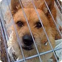 Adopt A Pet :: Baxter - Fowler, CA