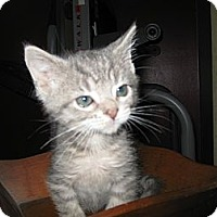 Adopt A Pet :: Tootsie Roll - Clearfield, UT