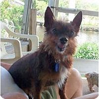 Adopt A Pet :: Harvey - Gulfport, FL