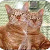 Adopt A Pet :: Peaches & Autumn - Portland, OR