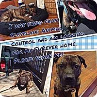 Adopt A Pet :: Teddy - Elderton, PA